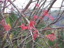Листья облетают