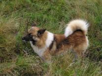 Полигусовская собака (3)