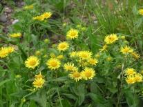 Цветы Суломая
